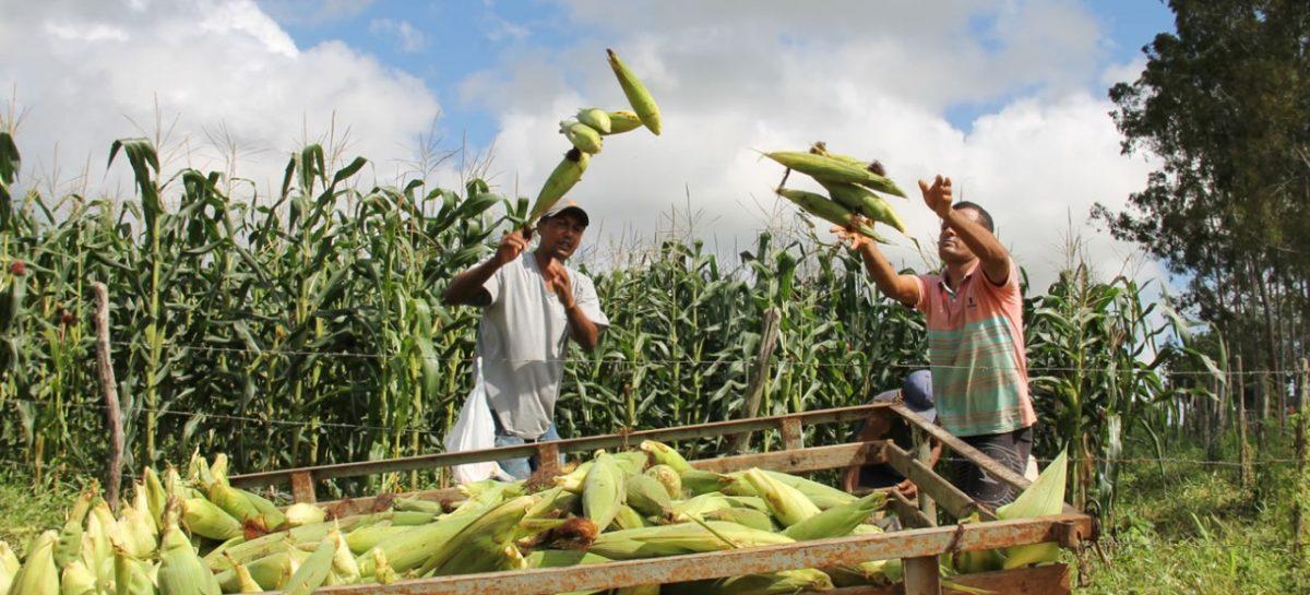 Banese dispõe de crédito para os produtores rurais