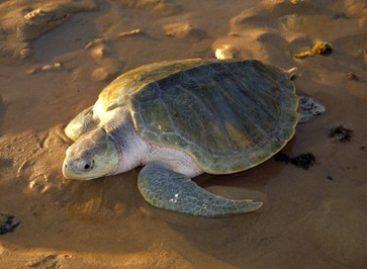 Após pedido do MPF, Justiça concede liminar contra pesca irregular em Sergipe