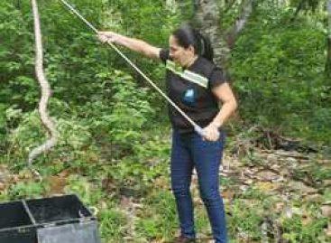 Cobra jibóia é encontrada em telhado de residência na grande Aracaju