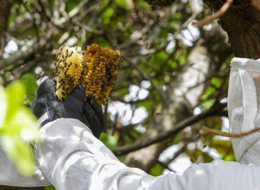 Com o apoio do governo do Estado, projeto atua no manejo correto da captura de abelhas