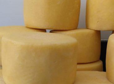 Lei que regulamenta queijarias artesanais será sancionada nesta segunda-feira