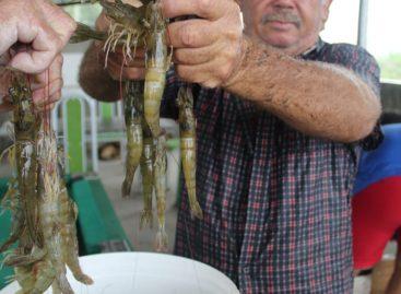 Assentados do Crédito Fundiário produzem camarão em São Cristóvão