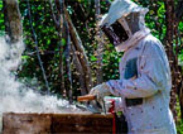 Dia do Apicultor: Codevasf incentiva atividade apícola em sua área de atuação