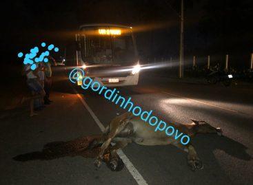 Animal solto em rodovia causa mais um grave acidente na SE-100