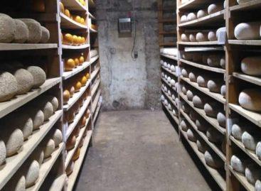 Sergipe é o quarto estado do Nordeste a regulamentar queijarias artesanais