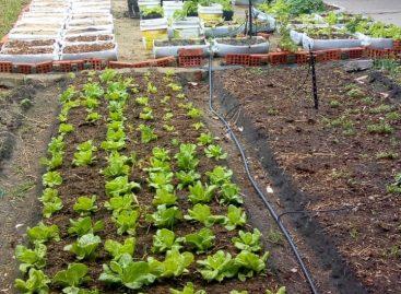 Colégio Leandro Maciel desenvolve horta cultivada em bandejas automatizadas