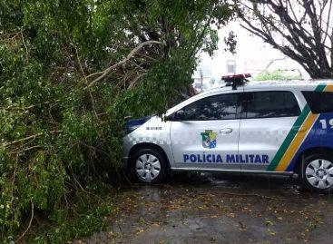 Árvore cai em cima de viatura da PM em frente ao Cefap em Aracaju