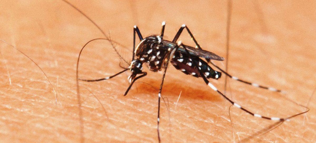 Sexta morte por dengue grave é confirmada pela Secretaria de Saúde
