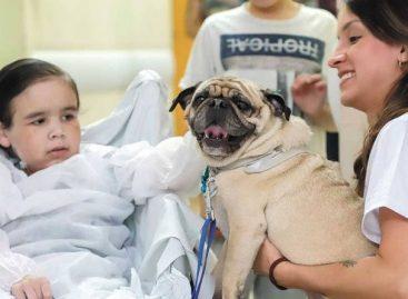 Tramita na Alese Projeto de Lei permite a entrada de animais em hospitais