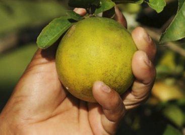 Alunos de Umbaúba desenvolvem sabão ecológico a partir do reaproveitamento da laranja