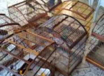 Pelotão Ambiental e Adema flagram cativeiro ilegal de aves silvestres no Conjunto Bugio