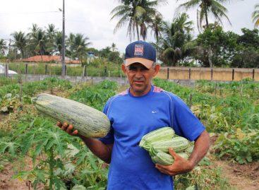 Agricultor irrigante Nilson dá lição de alta produtividade em pequeno espaço