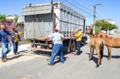 Cerca de 73 animais já foram apreendidos pela Emsurb em outubro