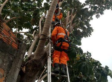 Bombeiros evitam queda de árvore no bairro Cidade Nova