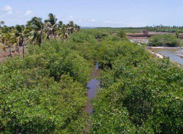 Governo do estado prevê R$ 12 milhões em investimentos ambientais para 2020