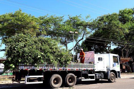 Prefeitura de Aracaju atua em serviço de poda para prevenir acidades