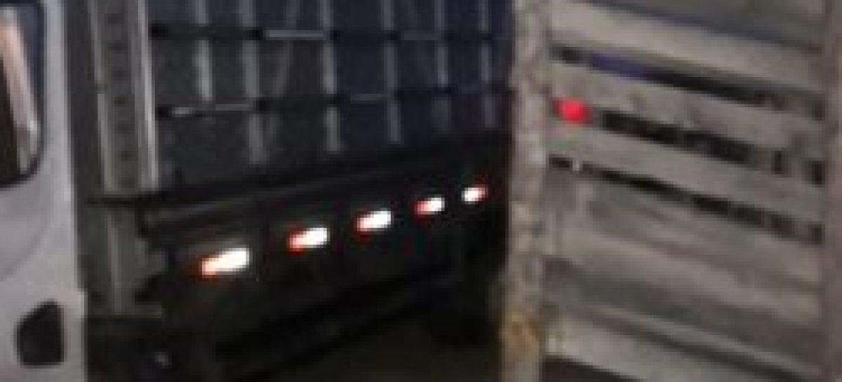 Policiais militares do 7º BPM e evitam roubo de gado e recuperam 14 animais em Lagarto
