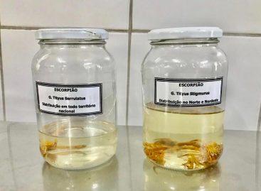 Veja orientação sobre cuidados para prevenir acidentes com escorpião