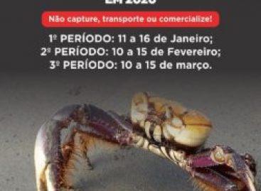 Segundo período de defeso do Caranguejo-Uçá inicia nesta segunda-feira