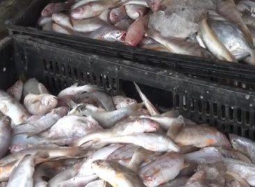 Audiência pública debaterá impactos das manchas de óleo na cadeia do pescado
