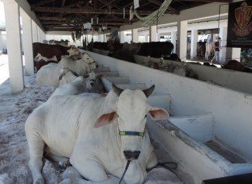 Feira Agropecuária de Sergipe será fechada ao público