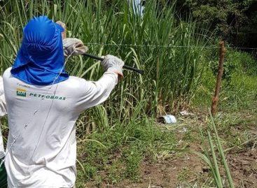 Nova fase de restauração florestal do Projeto Azahar recupera mais de 10 hectares