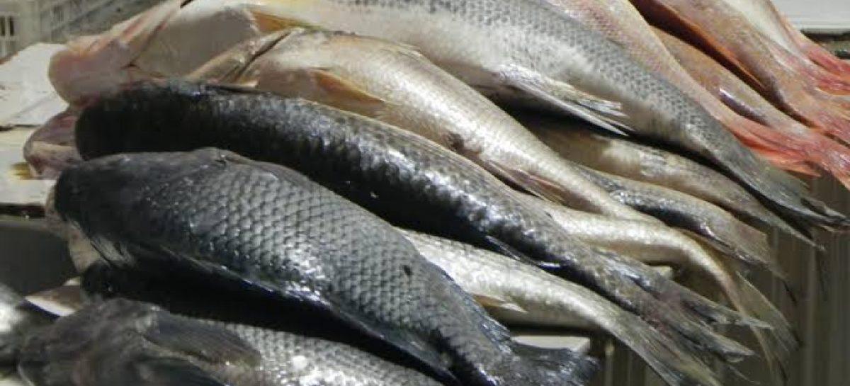 """""""Feira do Peixe"""" de Socorro está confirmada para quinta e sexta, no Mercado Central"""
