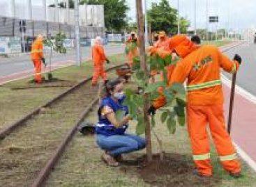 PMA atua no meio ambiente para desenvolver a cidade de forma consciente