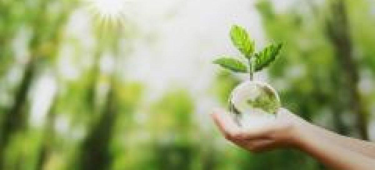 Manutenção da biodiversidade desempenha funções essenciais para os seres humanos