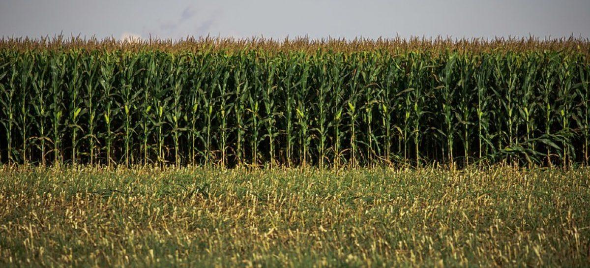 Faese pede revogação da portaria da Adema para atividades agrícolas
