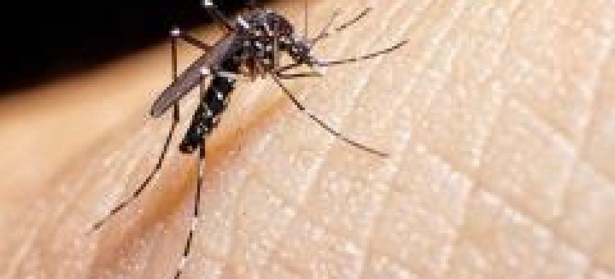 SES divulga Boletim Epidemiológico da Dengue, Chikungunya e Zika
