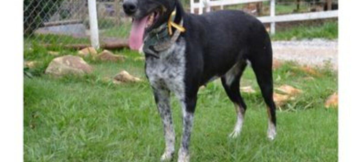 Vale realiza adoção virtual de animais resgatados em Brumadinho