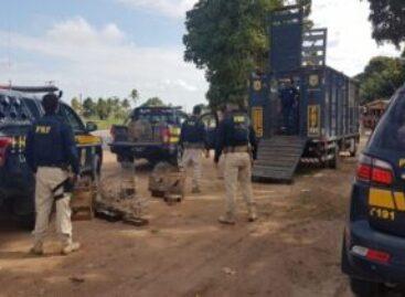 PRF resgata 112 animais silvestres durante a operação Harpia