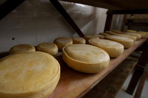 Emdagro traça novas estratégias para regularização de queijarias em Glória