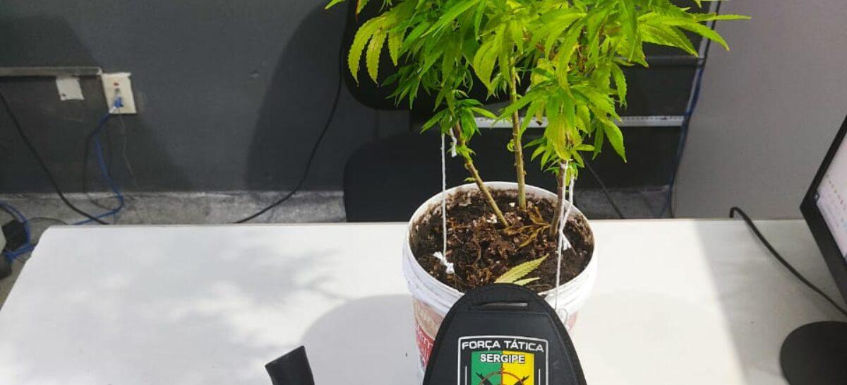 Tático prende indivíduo por cultivar maconha em residência no São Conrado