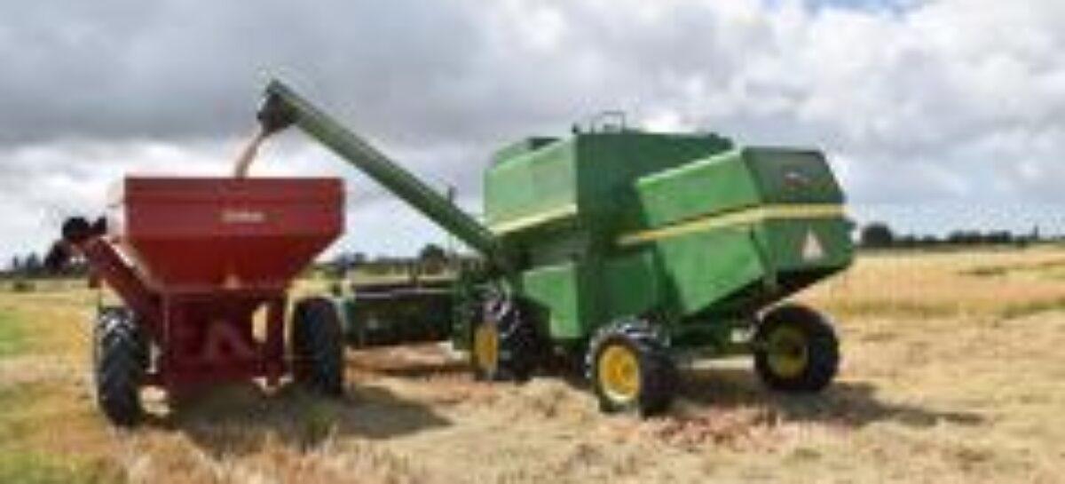 Avança colheita de arroz em projetos de irrigação da Codevasf em Sergipe