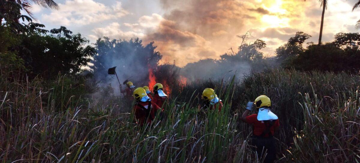 Incêndio de grande proporção atinge área de vegetação na Aruana, em Aracaju