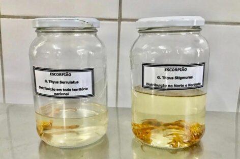 Alerta sobre cuidados para evitar aparecimento de escorpião nas residências