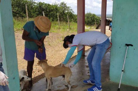 Campanha Nacional de Vacinação Antirrábica registra 140 mil cães e gatos vacinados