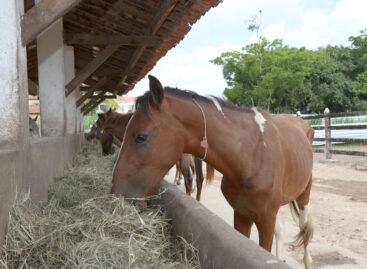 Prefeitura viabiliza adoção de animais de grande porte apreendidos em Aracaju